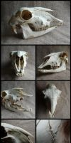 Sheep Skull #2 by CabinetCuriosities