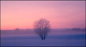 Cold mist in the fields I by Wodenswolf