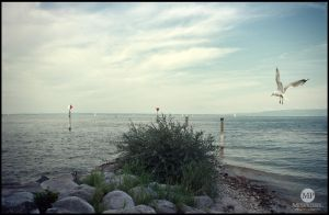 Bodensee #2 by MiusaPictures
