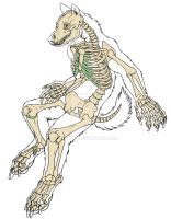 Anatomy Section Skeleton flat color by jmillart