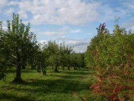 Orchard 12 by gsdark-stock