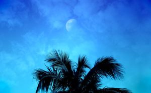 Moon and Palm by dophineh