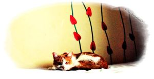 The Cat and The Tulips. by Broken-Starr-Child