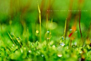 water drop in spring plant by KFT-Andri
