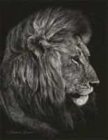 Regal Countenance - Scratchboard by ShaleseSands