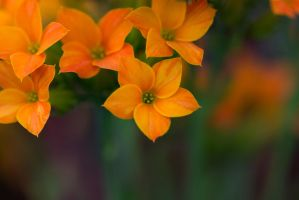 orange by saliyalein