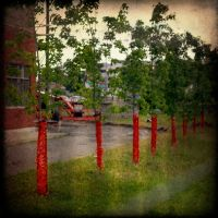 wrapped up trees by Izaaaaa