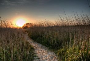 Walk to the sun by marschall196