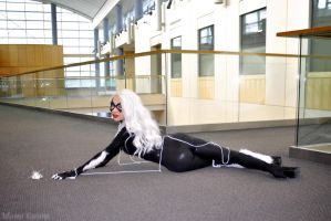 Black Cat: Fixation by MomoKurumi