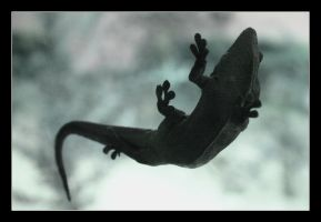 Flying gecko by danypope
