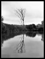 Lone tree - Aug 2006 by pearwood