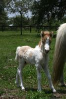 Mini Foal Stock 4 by GloomWriter
