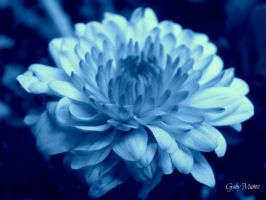 Blue Dreams by Dance0927