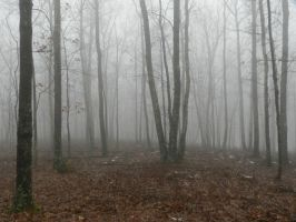 foggy forest3 by wroquephotography