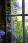 Old Window by bean-stock