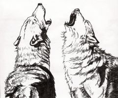 wolves by lisalasslee