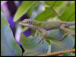 Young Anole by LarkPash