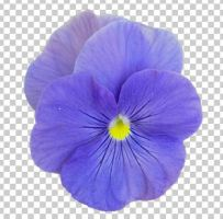01 pansies+transparent by ForestGirlStock
