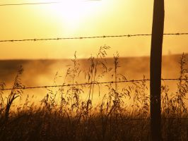 Sunrise near Oyen, Alberta by reenaj