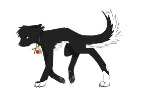Akita by Dragon-Wolf-Lover