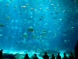 Georgia Aquarium 43 by Dracoart-Stock