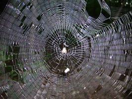 80 - web by WCat-stock