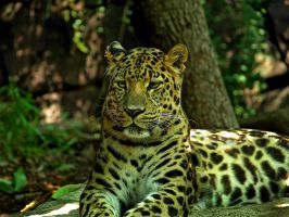Philadelphia Zoo 116 by Dracoart-Stock