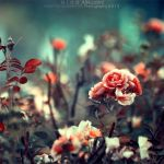 when we learn to see the beautiful things. .. by light-from-Emirates