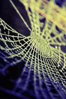 15.01.2012 - Web by Golldfire