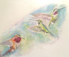 Humming Bird study  by ficondie