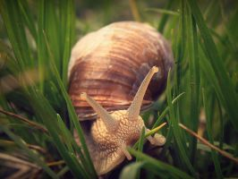 Mr. Snail by sylffkaaa