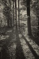 Shadowtime. by Phototubby