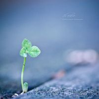 : h o p e : by hellfirediva