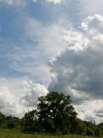 cloudy sky and tree by archaeopteryx-stocks