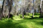 Argaka Forest, Cyprus. by Poolbandit