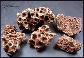 Coral Fossils - Payson, Arizona by andromeda