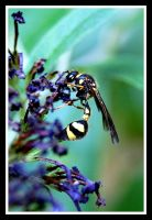 Potter wasp by Wunderling