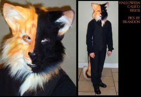 Halloween Calico Being Worn by Magpieb0nes