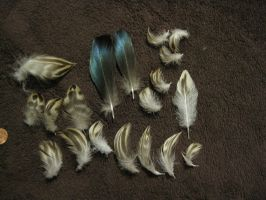 Duck Feathers by TheNewCoyote
