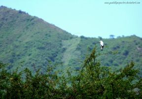 Bird. by Guadalupespectro