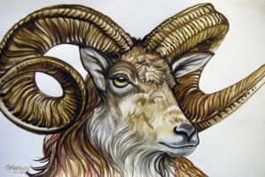 Number 1 Ram by HouseofChabrier
