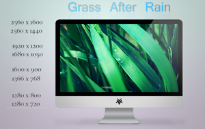Grass After Rain by fifteeNArt