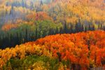 Fall In The Gunnison National Forest by kkart