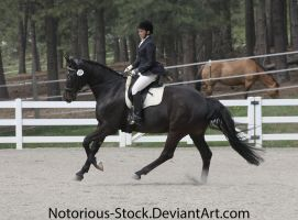 Dressage 015 by Notorious-Stock