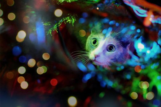 not a creature was stirring by sarah-marley