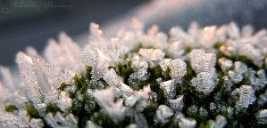 Frosty Morning by Yuki-Almasy