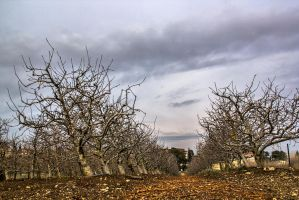 Rows of Nectarines by ShlomitMessica