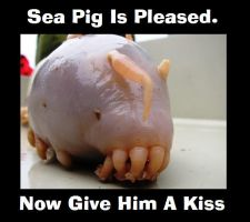Sea Pig Is Pleased by G-Midgit