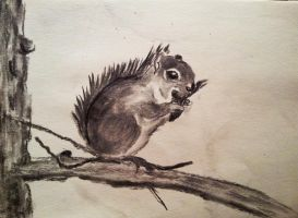 A sweet squirrel by sophicardia