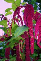 Love Lies Bleeding by JennMishou